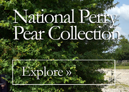 National Perry Pear Collection